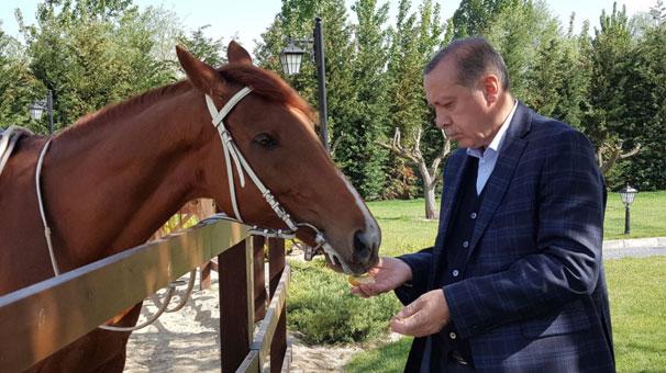 Başdanışmanı paylaştı! Cumhurbaşkanı Erdoğan...
