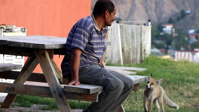 Erzurum'da bir kere yem verdiği tilkiden bir daha kurtulamadı