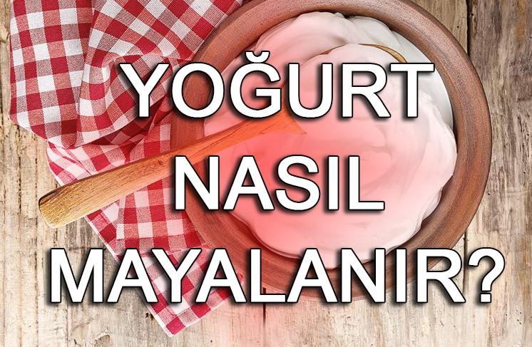 Ev yoğurdu nasıl yapılır? Ev yoğurdu nasıl mayalanır?