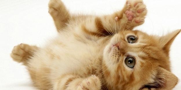Evcil hayvanlar Koronavirüs taşıyıp bulaştırabilirler mi?