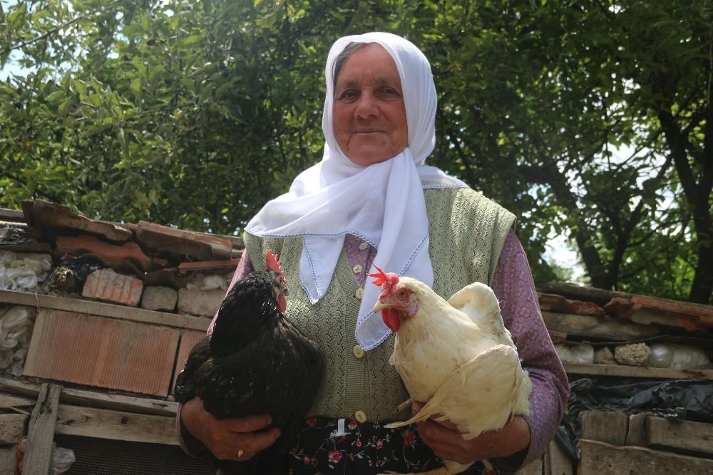 Fadime teyze geçimini yumurtadan sağlıyordu: Köpekler, tavuklarını telef etti
