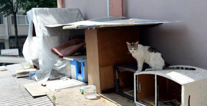 Fatih'te hayvanseverleri ayağa kaldıran olay
