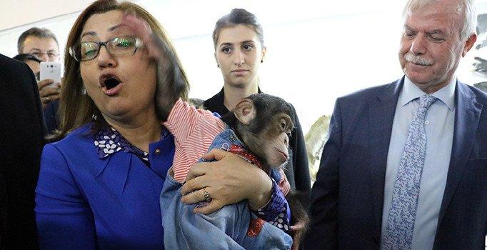 Fatma Şahin şempanze Can'ı severken olanlar oldu