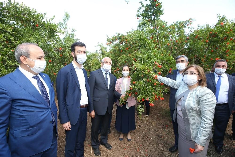 Fatma Şahin'den Oğuzeli nar bahçelerine ziyaret