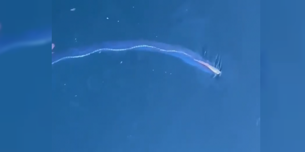 Deprem habercisi kral ringa balığı tekrar ortaya çıktı