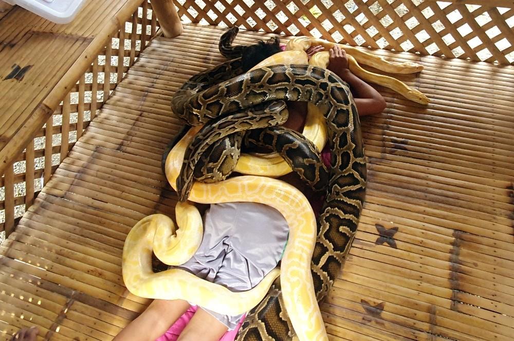 Filipinler'de turistlere yılan masajı