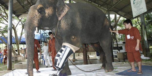 Filler için harekete geçtiler... Dünya'da bir ilk...