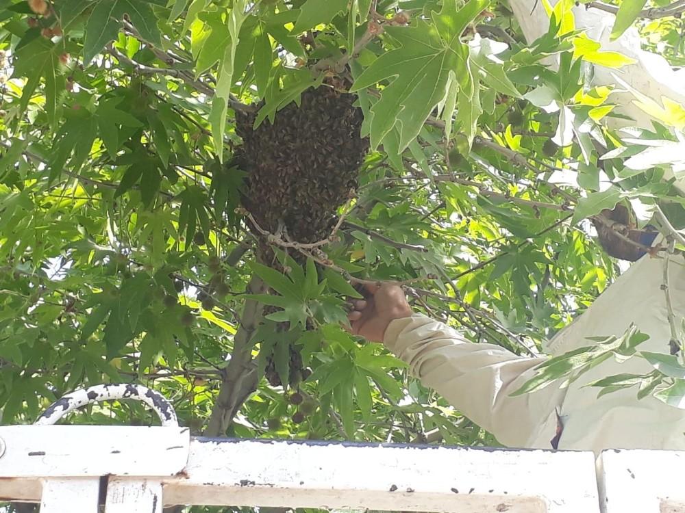 Firar eden arıları itfaiye sahibine teslim etti