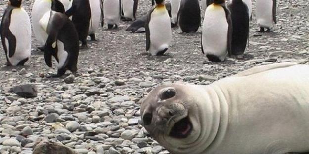 Fok balıkları ile selfie çekmeyin uyarısı