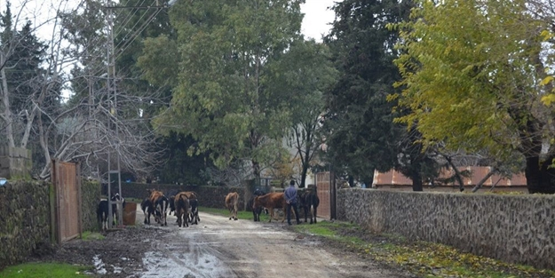 Gaziantep'te bir mahalle 6 ay süreyle karantinaya alındı!