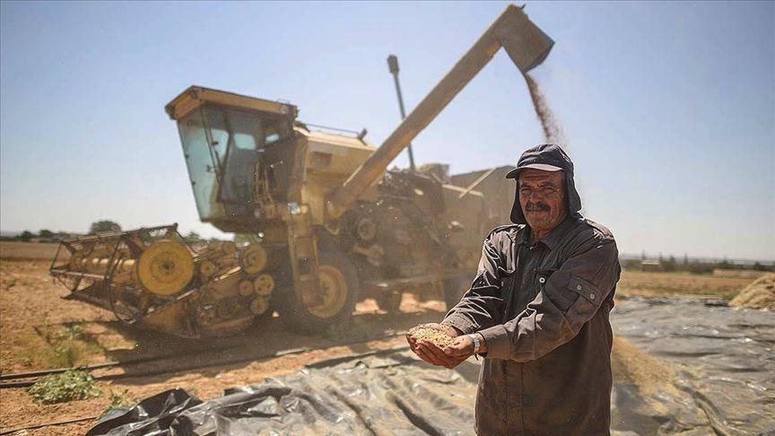 Gazze'de geliştirilen biçerdöver hem çiftçiyi hem de cebini koruyor