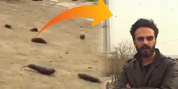 'Gökten yağan patlıcan' videosu olay olmuştu... Videoyu yayan öğrenciler gözaltına alındı