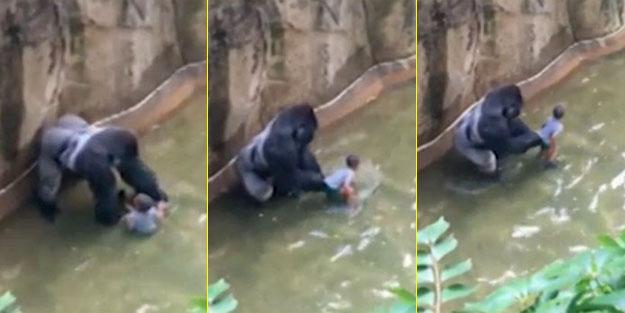 O goril ile ilgili şok iddia!