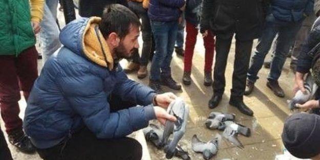 Güvercin katliamının nedeni belli oldu
