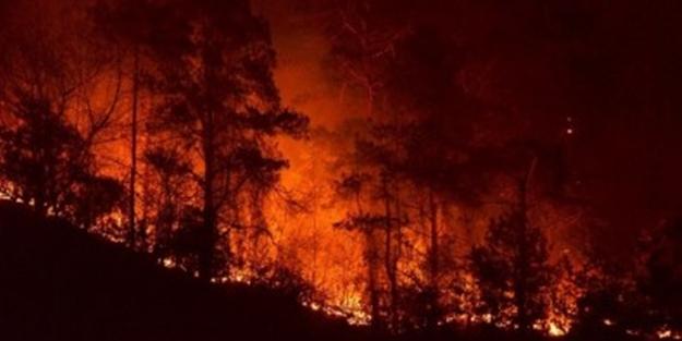 Hangi ülkede kaç tane yangın çıktı?