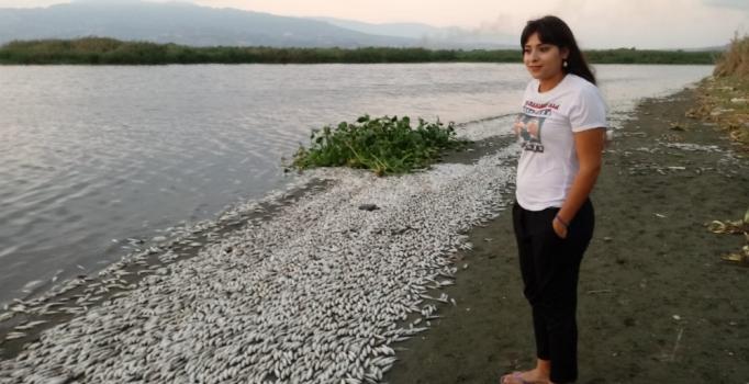 Hatay'da Asi Nehri'nde balıklar oksijen yetersizliğinden telef olmuş