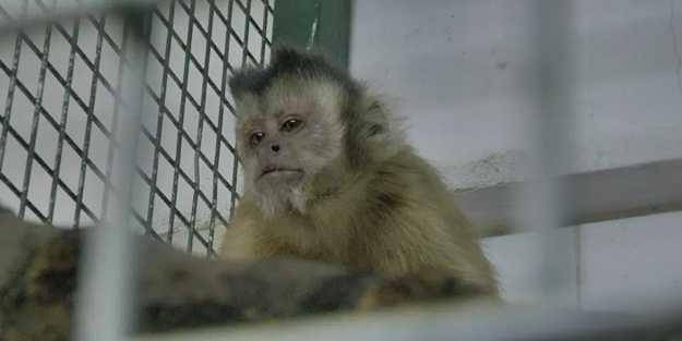 Hayvanat bahçesinden kaçtı, elektrik akımına kapıldı