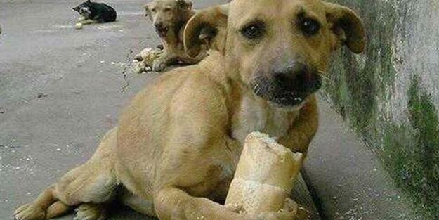 Hayvanlara yapılan işkenceler ve cezaları