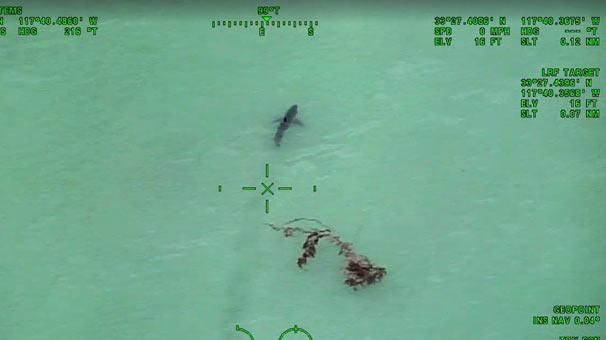 Helikopterden köpek balıklarını gördüler! Polis anons etti...