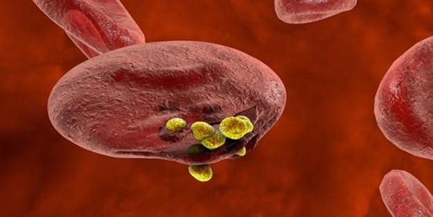 Her yıl yüz binlerce insanın ölümüne neden olan hastalık kontrol altına alınabilir