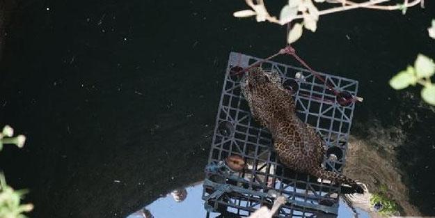 Hindistan'da leopar sıkıştığı kuyudan böyle kurtarıldı