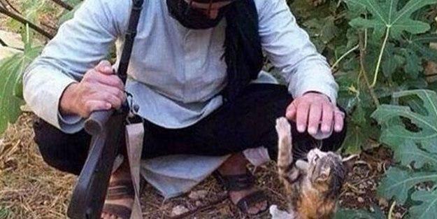 IŞİD'in canlı bombası 'kediler'