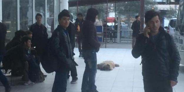 İstanbul diye Artvin'e getirdiler