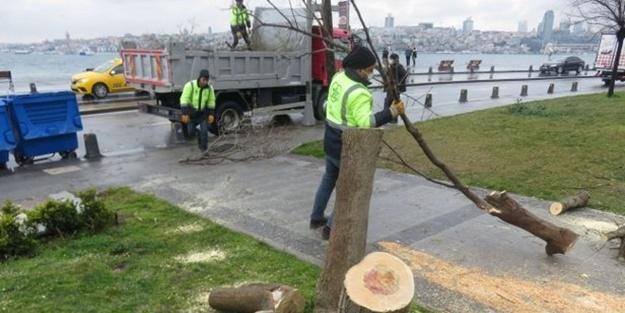 İstanbul'da ağaç kesen şahıslara ibretlik ceza