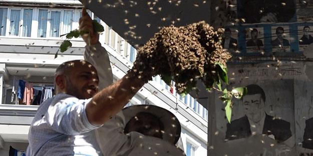 İstanbul'da arı paniği! Binlercesini kolunda toplayıp kovana koydu