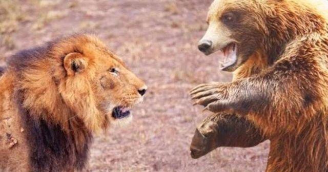 İstanbul'da korku! 1 aslan ve 2 ayı aranıyor
