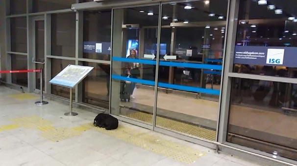 İstanbul'da soğuk havada üşüyen köpek havalimanına sığındı