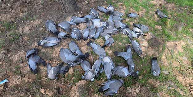 İstanbullulara şok uyarı! Ölü kuş görürseniz sakın...