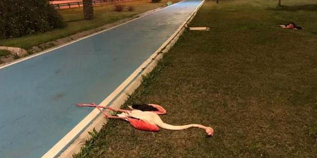 İzmir'de kuş gribi mi var? Bayraklı'da flamingo neden öldü?