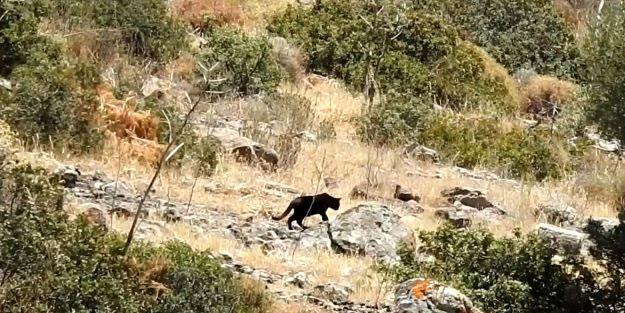 Jaguar sandıkları hayvanın ne olduğunu öğrenince inanamadılar