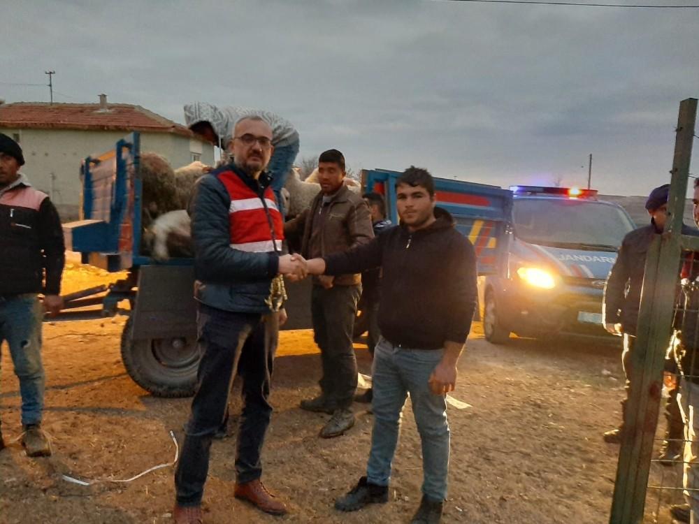 Jandarma çalınan küçükbaş hayvanları buldu sahiplerine teslim etti