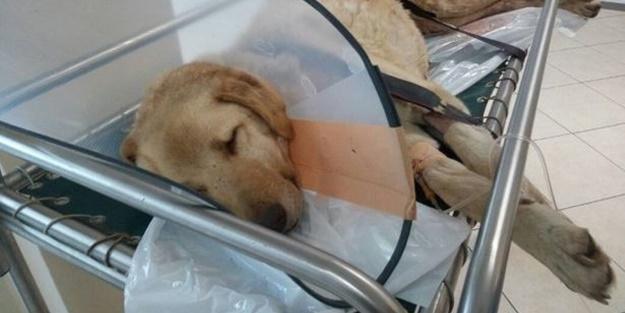 Kanser olan köpek için seferber oldular