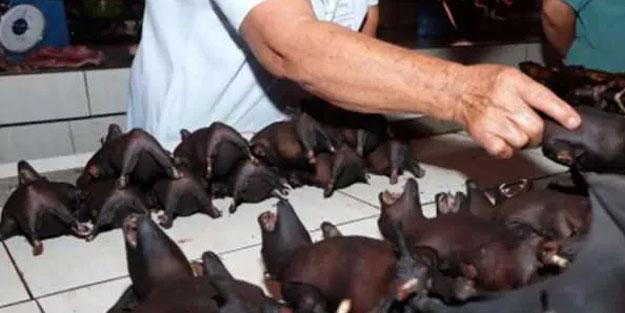 Kâr etmek için doğal hayatın talan edilmesi virüslerin hayvanlardan insanlara geçişine neden oldu