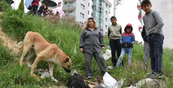 Karabağlar'da zehirli tavuk etiyle köpek katliamı