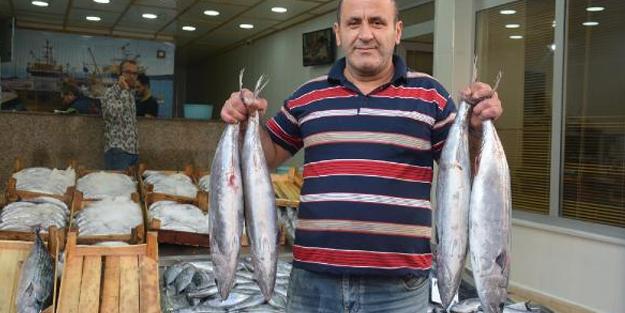 KARADENİZ'DE TORİK BEREKETİ! TANESİ 125 TL