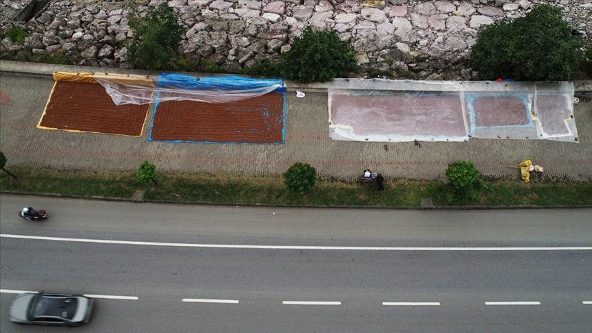 Karadenizli fındık üreticileri 'kurutma' çalışmalarına başladı