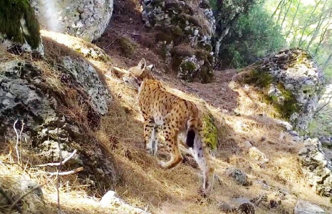 Karakulak'tan fotokapan selamı
