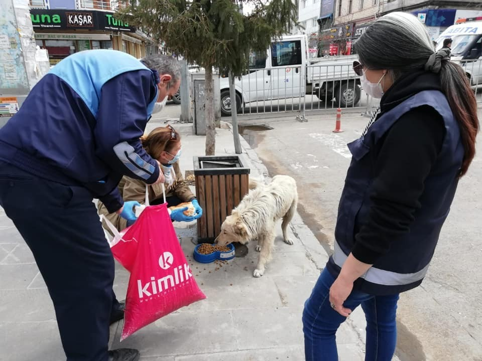 Kars'ta Sokak hayvanlarına yiyecek bırakılıyor