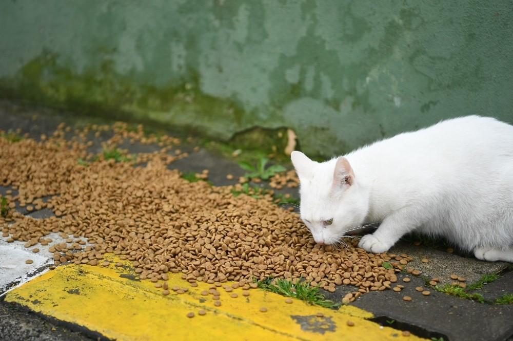 Kartepe'de sokak hayvanları da unutulmadı