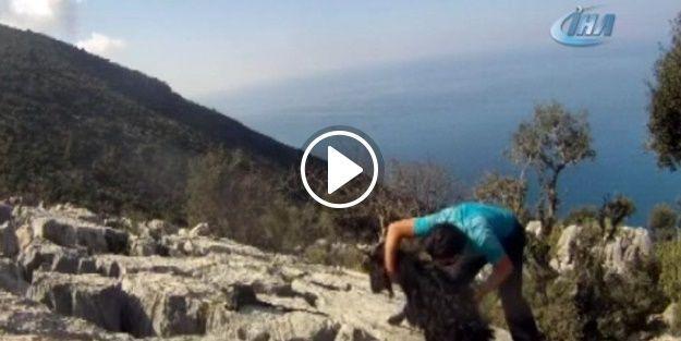 Kayalıklara sıkışan keçiyi doğa sporcusu kurtardı