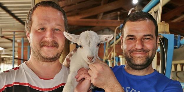Keçi çiftliği hayatlarını değiştirdi