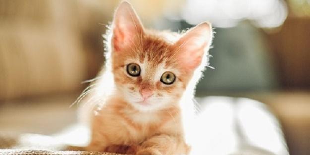 Kedi beslemek övülmüştür