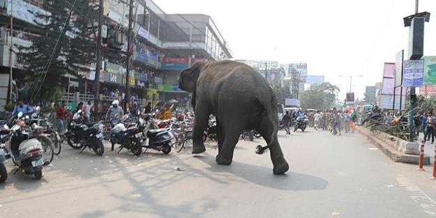 Kenti Filler bastı... Onlarca ölü var...