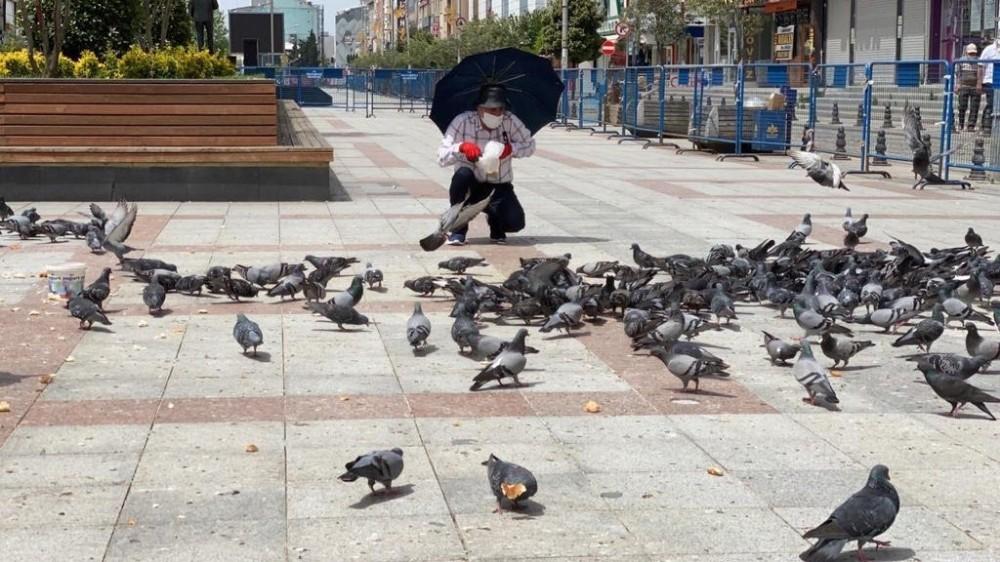 Kısıtlama günlerinde güvercinleri 65 yaş üstü vatandaşlar besledi