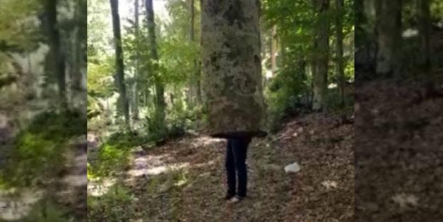 Kökü olmadan havada duran ağacı görenler şaşkına dönüyor