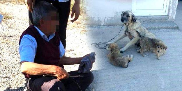 Köpeğe tecavüz ederken yakalandı! Görüntüler şok etti
